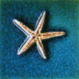 กระเบื้อง รุ่น คริสตัลแอนติก้า ปลาดาวบลู