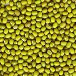 ถั่วเขียว Green mung bean