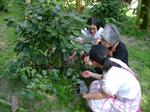 กาเเฟของหนูเชิดชูคุณธรรม โรงเรียนอมก๋อยวิทยาคม