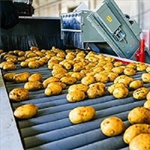 Potato set 6S strictly selected potato wholesale