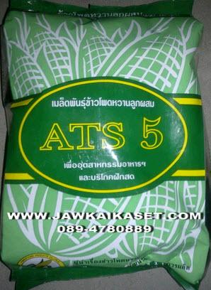 เมล็ดพันธุ์ข้าวโพดหวาน ATS5 ตราแปซิฟิค
