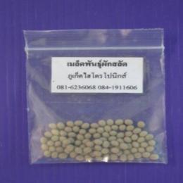 เมล็ดพันธุ์ผักสลัด (เคลือบ) จำนวน 100 เมล็ด