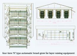 กรงไก่ไข่อัตโนมัติแบบ H Frame