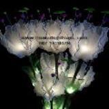 โคมไฟดอกดาวดึงส์ สีขาว