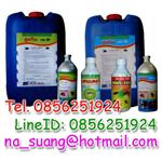 สารเคมีกำจัดแมลง,น้ำยากำจัดแมลง,ยาปราบแมลง,ยาฆ่าแมลง,น้ำยาแมลง,ยาแมลง,แมลง,กำจัดแมลง
