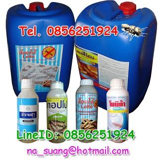 สารเคมีกำจัดปลวก,น้ำยากำจัดปลวก,ยาปราบปลวก,ยาฆ่าปลวก,น้ำยาปลวก,ยาปลวก,ปลวก,กำจัดปลวก