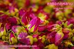 ชาดอกกุหลาบ (Rose FlowerTea) 100g.