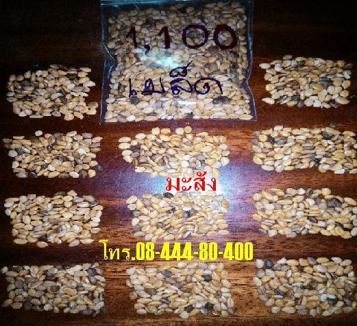 ขายเมล็ดมะสัง(กะสัง)เก็บจากต้นในสวนป่าธรรมชาติ สำหรับไม้ประดับบอนไซหรือเพื่อเสียบยอดมะนาว