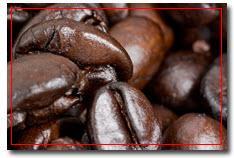 กาแฟโรบัสต้า