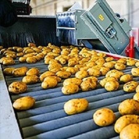 Potato set 6S strictly selected potato wholesale