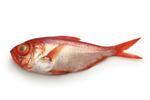 ปลาคินเมไดสด