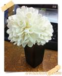 ก้านดูดน้ำหอมดอกผักบุ้ง (DFS004)