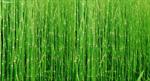 หัวน้ำหอม กลิ่นต้นไม้ ใบไม้ Fragrance - Tree, Leaves (PF003)