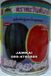 เมล็ดพันธุ์แตงโม กินรีC29 ตราตะวันต้นกล้า