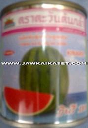เมล็ดพันธุ์แตงโม กินรีC101 ตราตะวันต้นกล้า