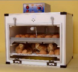 ตู้ฟักไข่ ( 36 ฟอง ) และตู้เกิดในตู้เดียวกัน ( 36