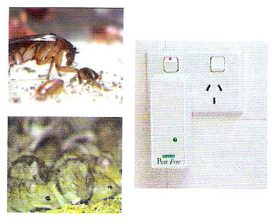 เครื่องไล่หนูและแมลงสาบ (TV04018)