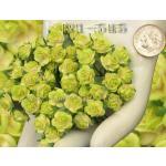 ดอกไม้กระดาษ สีเขียว R1-154
