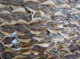 ปลาข้างเหลืองไม่งาตากแห้ง